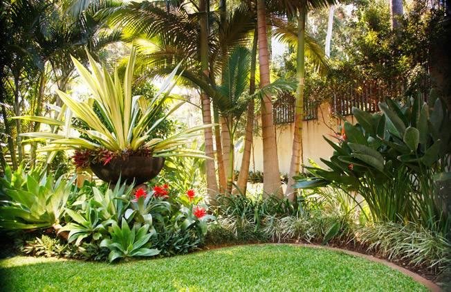 Design Tropical Landscape