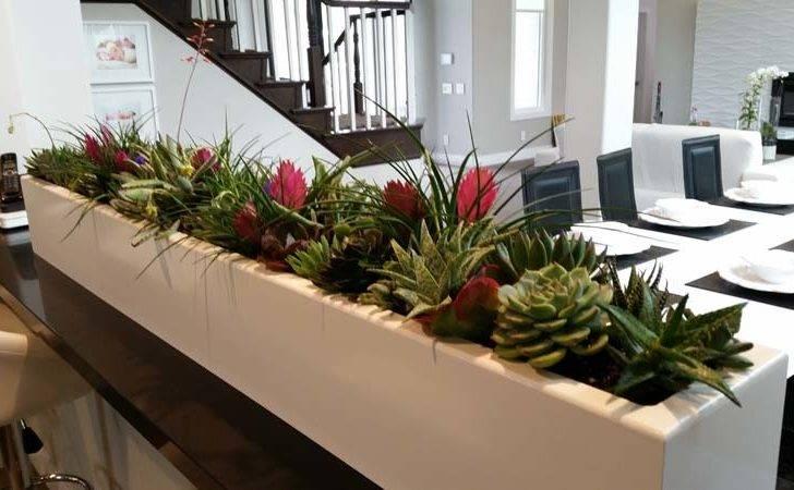Designer Home Newport Beach Plantopia Interior Plant Service