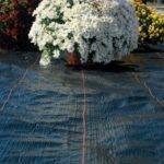 Dewitt Year Weed Barrier Landscape Fabric Roll Ebay