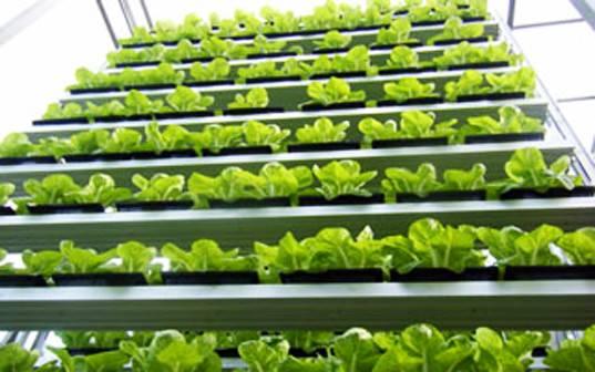 Dirt Gardening World First Vertical Farm Growing Singapore