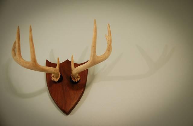 Diy Deer Antler Necklace Rack Flickr Sharing
