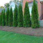 Diy Landscaping Landscape Design Ideas Plants Lawn Care