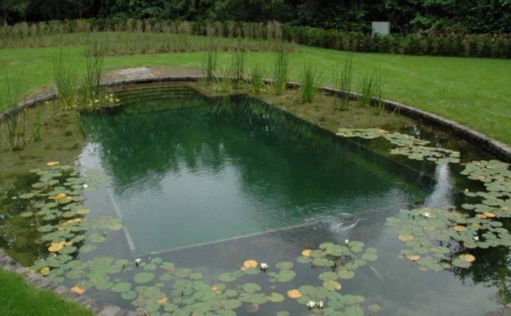 Diy Natural Swimming Pool Construction Backyard Design Ideas