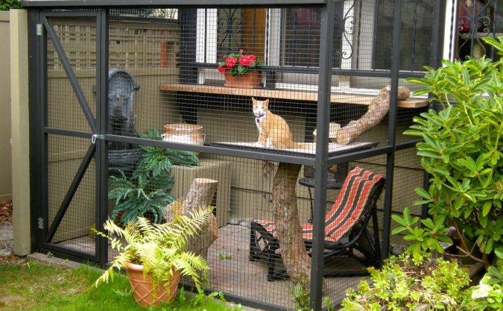 Diy Projects Build Your Own Cat Enclosure Melsteel
