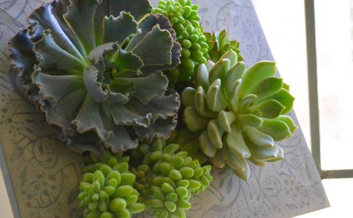 Diy Succulent Living Frame Camille