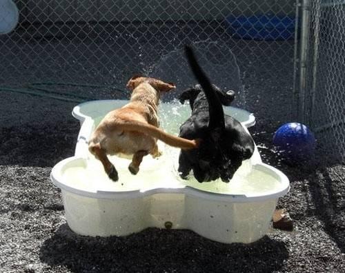 Dog Bone Shaped Pool Lol Water Puppies Pinterest