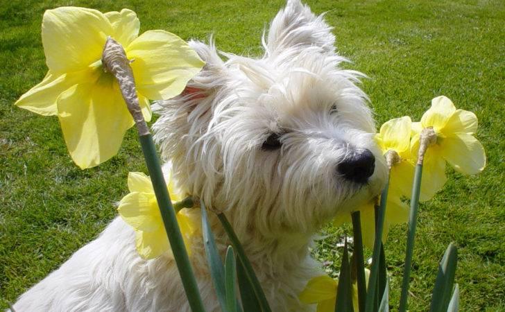 Dog Friendly Gardens Lifestyles Estelia