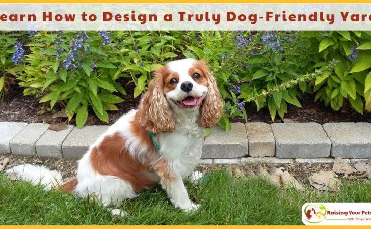 Dog Friendly Gardens Yards Plants Flowers