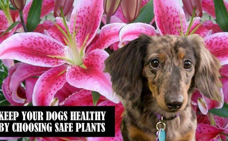 Dog Friendly Plants Flowers Florissa