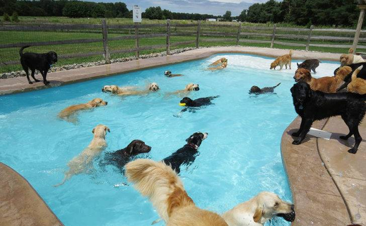 Dog Pool Party Lucky Puppy