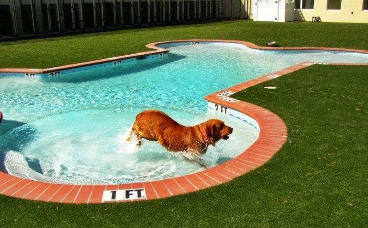 Dog Pools Geometric Pool Bone Shape Commercial