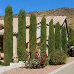 Don Plant Certain Trees Las Vegas Landscaping
