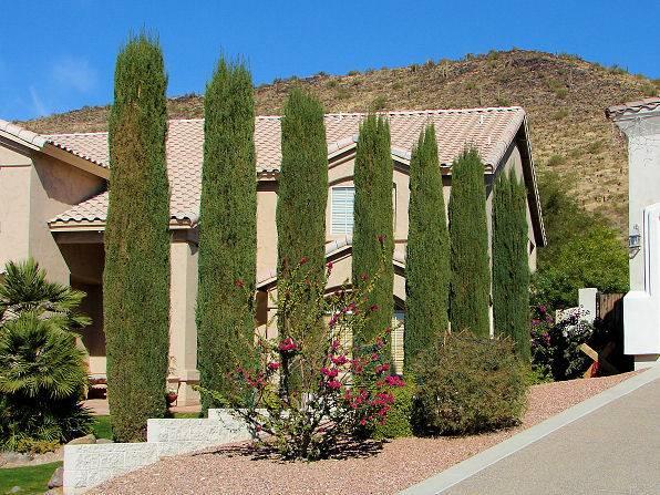Don Plant Certain Trees Las Vegas Landscaping