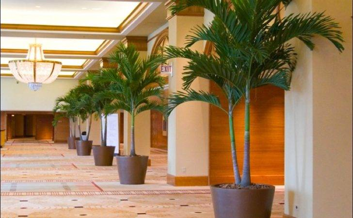 Douglass Chicago Interior Flowers Commercial Landscaping Lobby Hotel