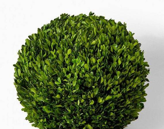 Dry Grass Boxwood Balls Preserved Ball