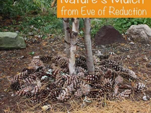 Eco Friendly Frugal Mulch Eve Reduction