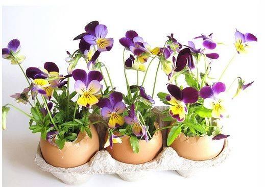 Egg Shells Arrangement Purple Yellow Flowers