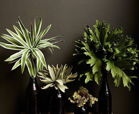 Exotic House Plants Arts