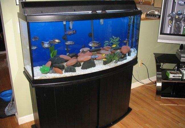 Exploring Best Bow Front Aquariums Your Home