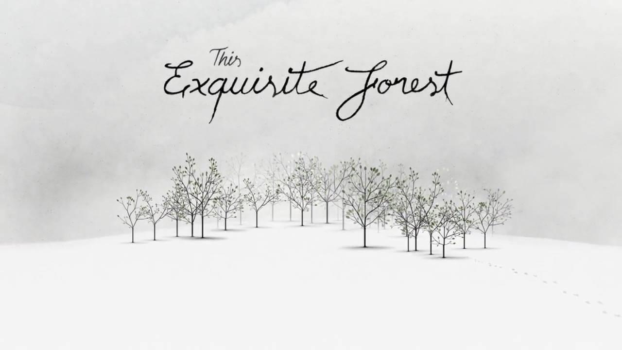 Exquisite Forest Taringa