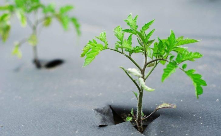 Fabric Premium Weed Control Landscape