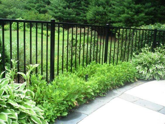 Fence Front Yard Pinterest Fencing Ideas Plants