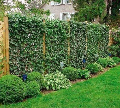 Fence Garden Design Green Privacy Fences Climbing Plants