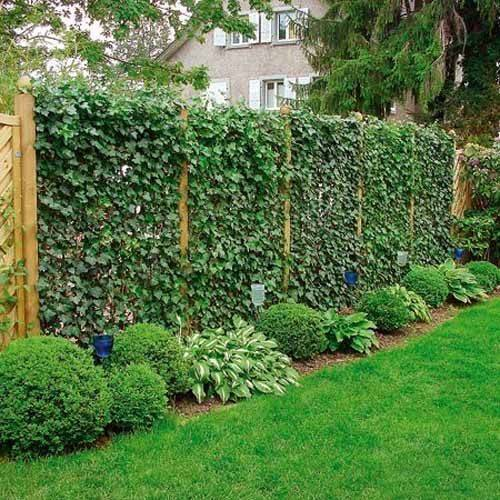 Fence Garden Design Green Privacy Fences Climbing Plants