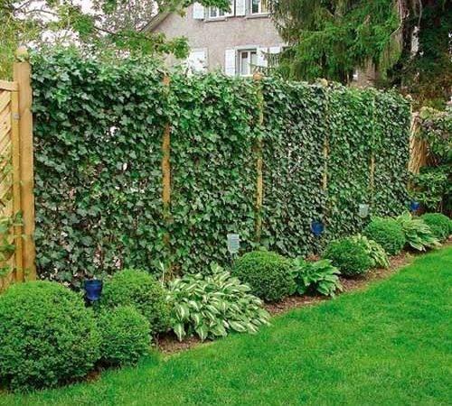 Fence Landscaping Pinterest Along