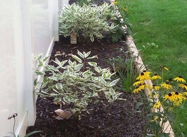 Fence Line Landscaping Garden Pinterest
