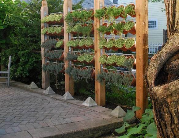 Fence Shade Choose Plants Likewise