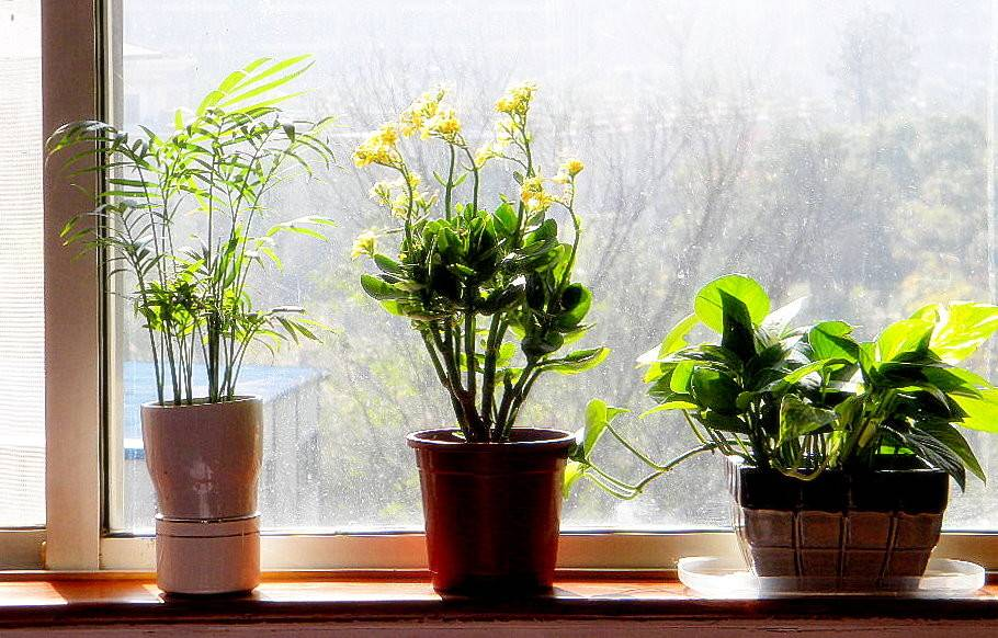 Feng Shui Plants Bedroom Tao Dana
