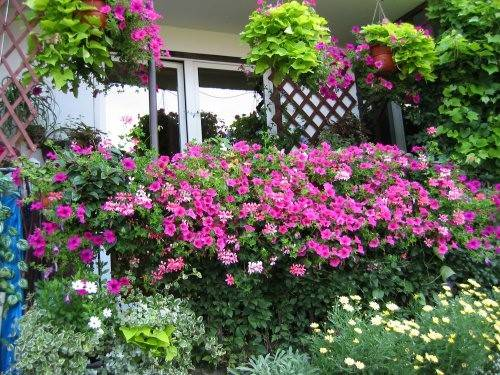 Find Out Best Plants Balcony Garden List Make Your