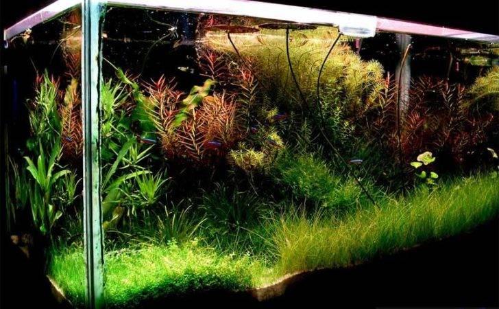 Fish Tank December Age Aquariums Tropical