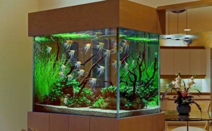 Fish Tank Home Diy Aquaponics System