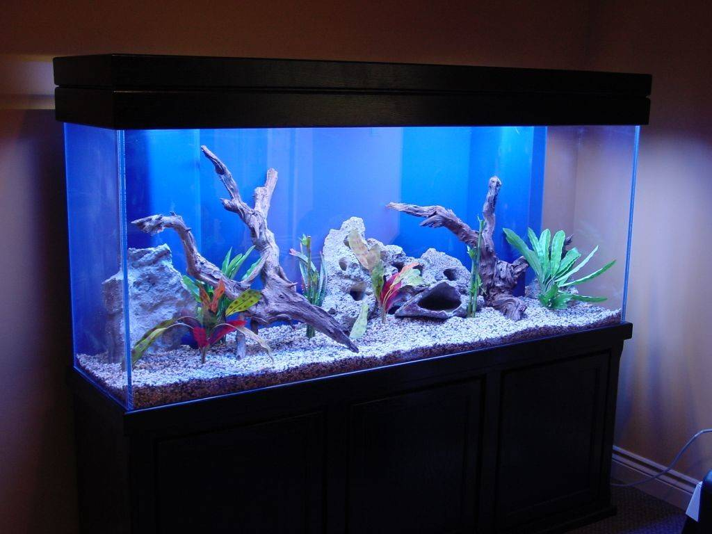 Fish Tank Home