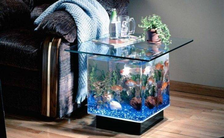 Fish Tank Too All Things Add Suitable