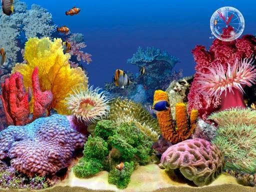 Fishing Zone Tropical Fish