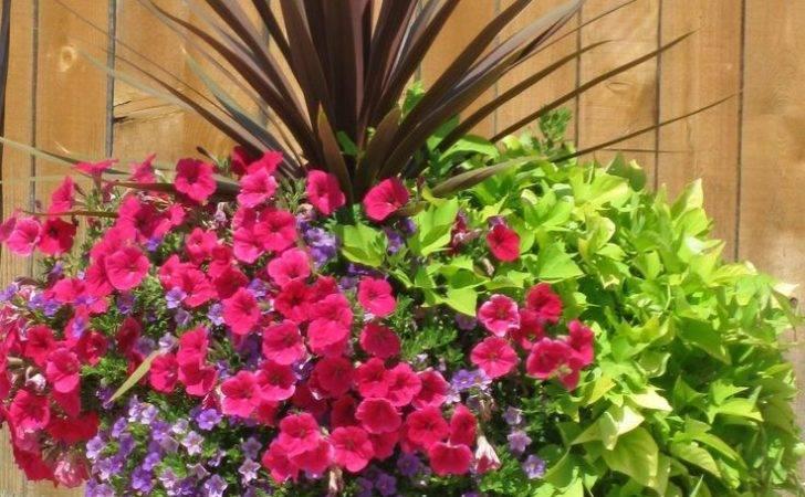 Flower Pots Around Pool Love Sweet Potato Outdoor Ideas