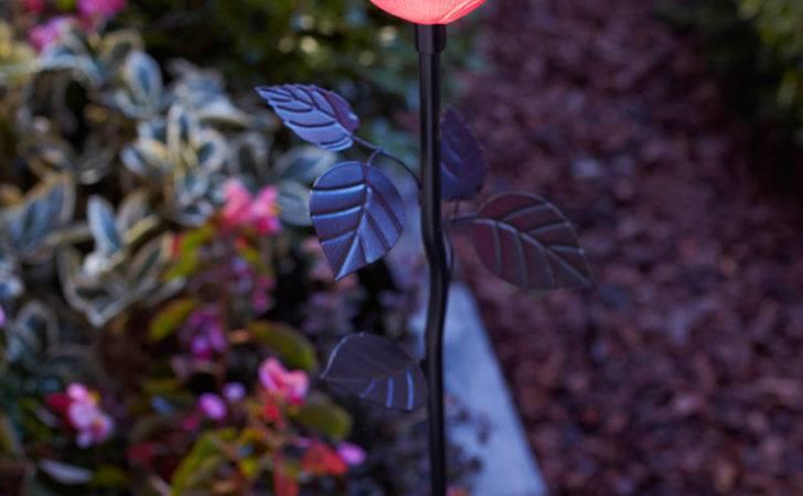 Flower Stake Light Pink Rose Led Household Bulbs Amazon