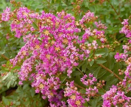 Flowering Privacy Hedges Best Shrubs