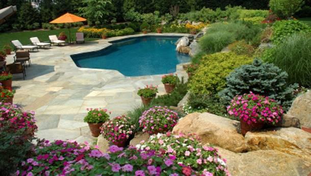 Flowers Around Swimming Pool Lomets