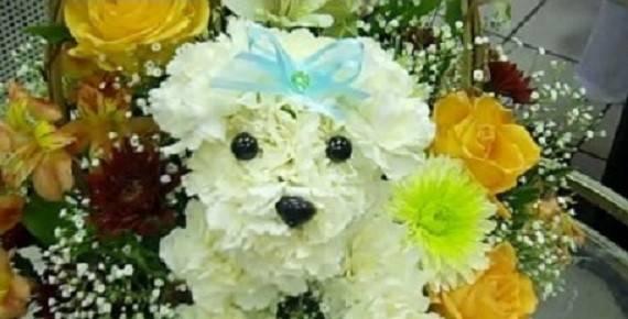 Flowers Pet Friendly Home Bloomnation Blog