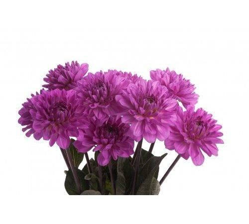 Flowers Types Purple