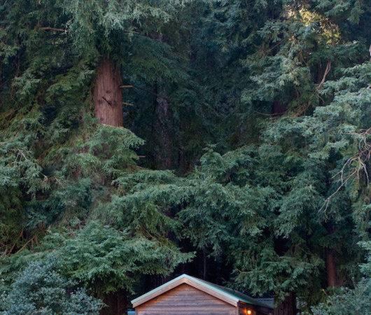 Forest Cabins Big Sur California Fernwood Resort