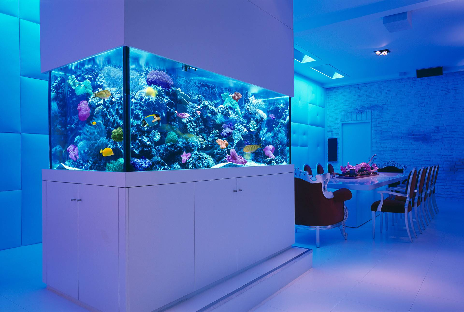 Fotos Aquarium Design Ideas Home