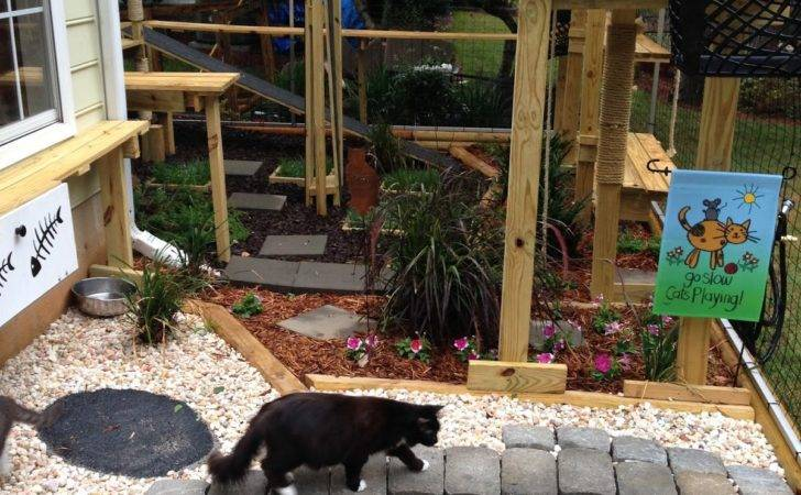 Francis Wild Bird Hospital Keeping Cats Birds Safe Catios