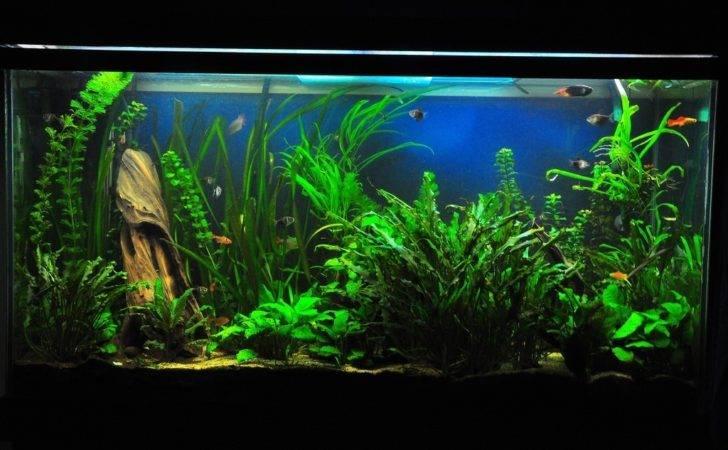 Freshwater Fish Tank Tropical Just