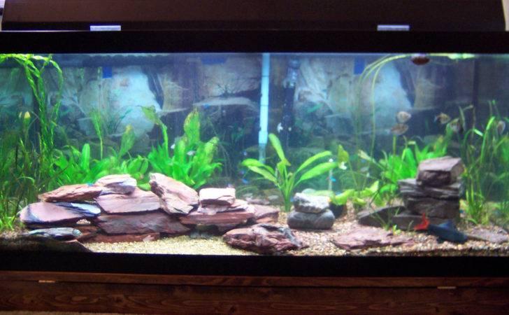 Gallon Aquarium Here Link Good Resource Tropical Fish