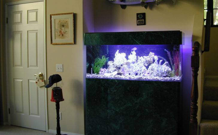 Gallon Marine Fish Tank Aquarium Design Aquariums